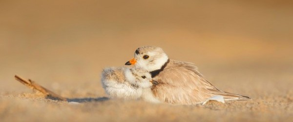 birds-1835622_960_720