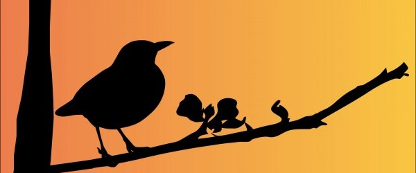 blackbird-163503