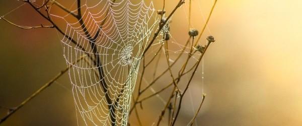 cobweb-1025021_960_720