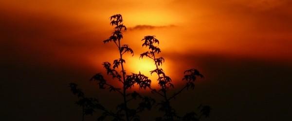 sunset-114558_960_720