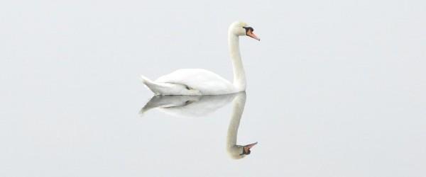 swan-293157_960_720